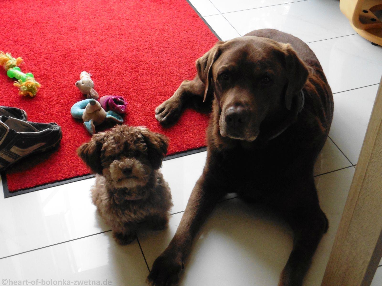 Baileys und Diego