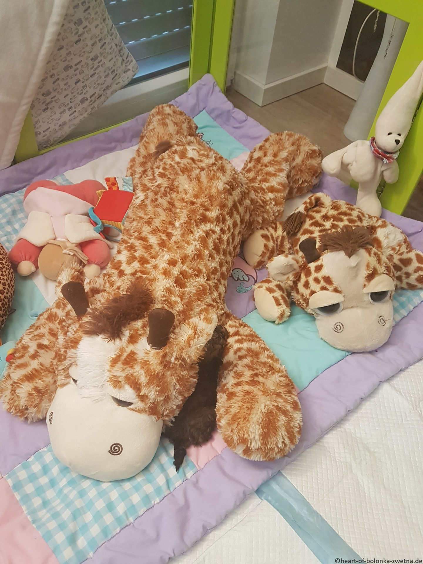 Elliot in seinem Großwildgehege... die Riesen-Giraffe liebt er