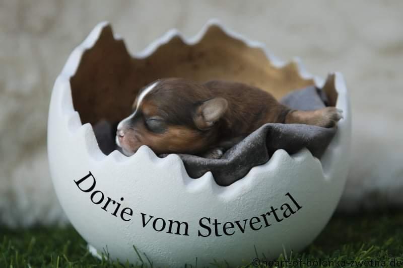 Dorie vom Stevertal