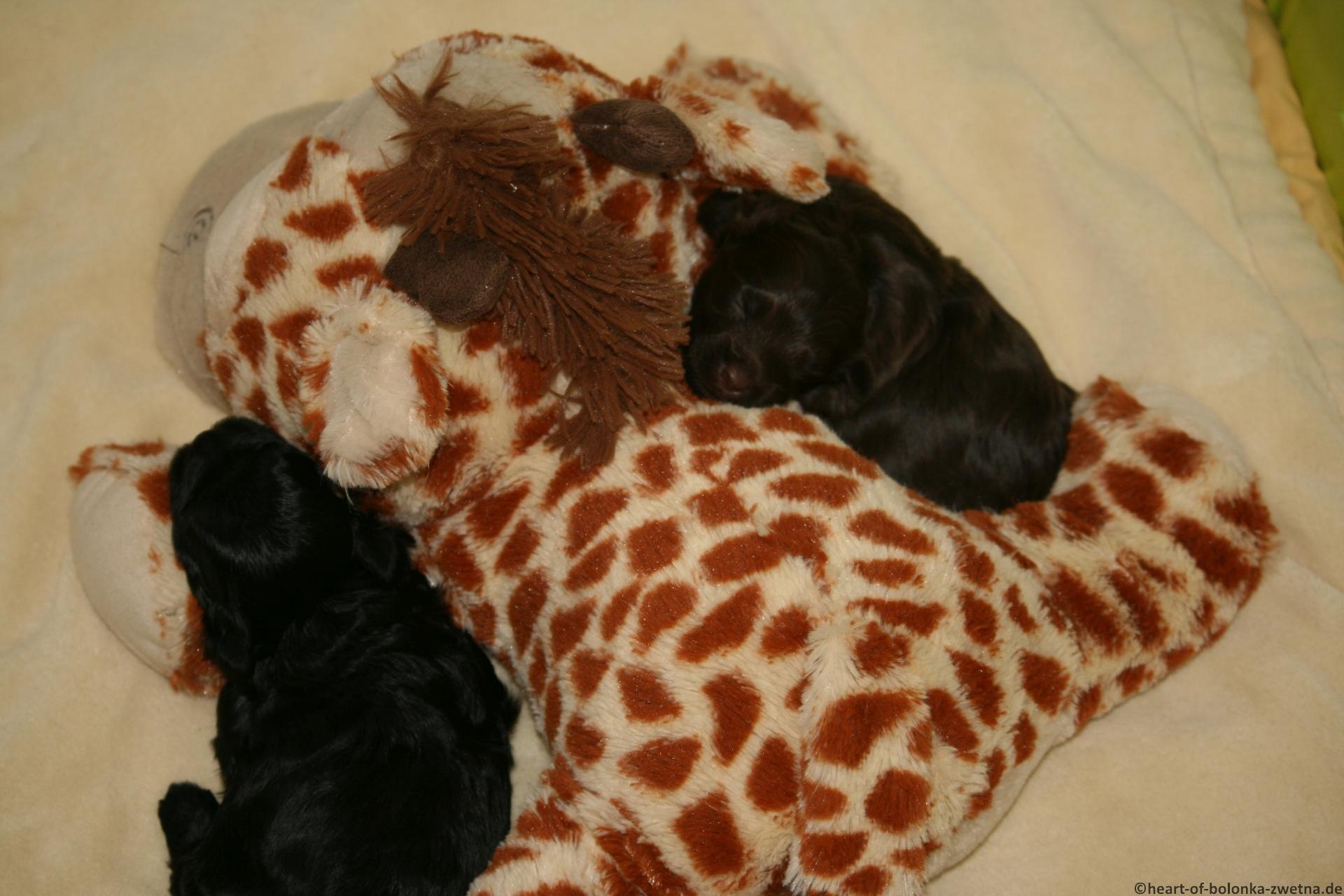 Kuscheln mit Giraffe Geoffrey