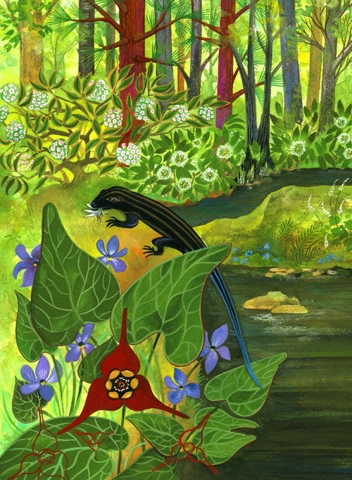 Five-Lined Skink / client: Atlanta Botanical Gardens / gouache