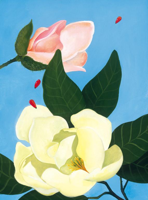 Magnolias / client: Atlanta Botanical Gardens / gouache