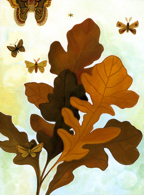 Oak Leaves and Moths / client: Atlanta Botanical Gardens / gouache