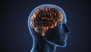 """Proyecto """"Alimenta tu cerebro"""""""