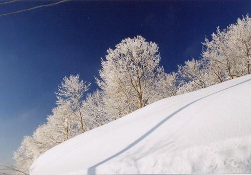冬の華 山本山