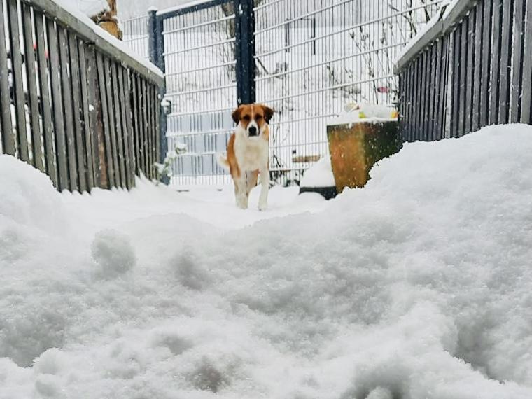 Winston im Schnee