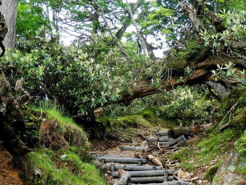 シャクナゲの森を抜け、階段を登ると