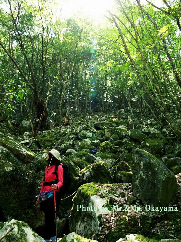 シシ神の森:苔むす深森