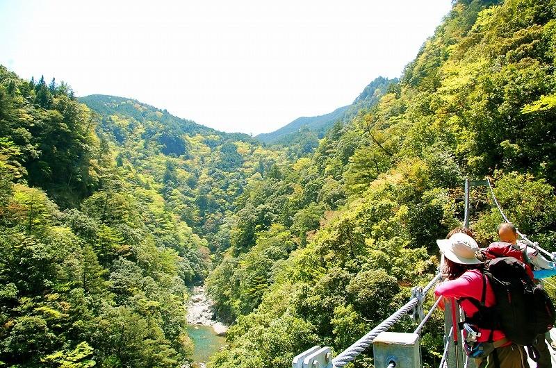 日浦杉吊橋:大杉谷には11もの吊橋が!