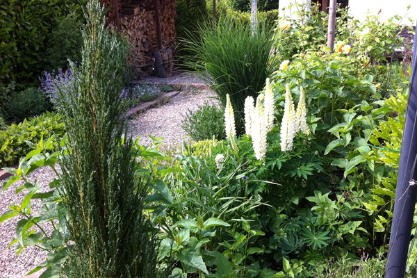 Gartenoase 6