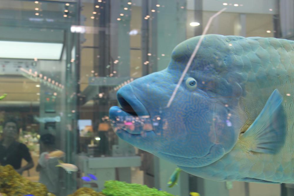 こんな魚も水槽にはいました。