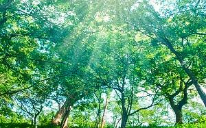 【画像】森の中の朝日