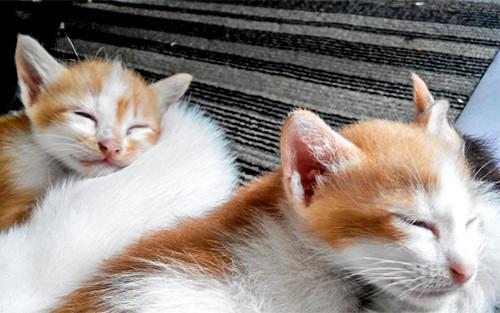 【画像】寝ている猫