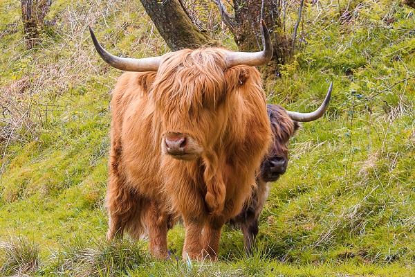 Wanderreisen Schottland - Kintail Knoydart