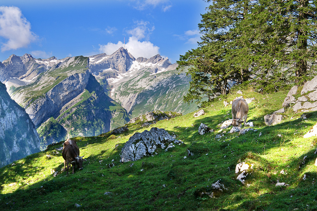 Appenzeller Land| fotokueche | © Diana Klar