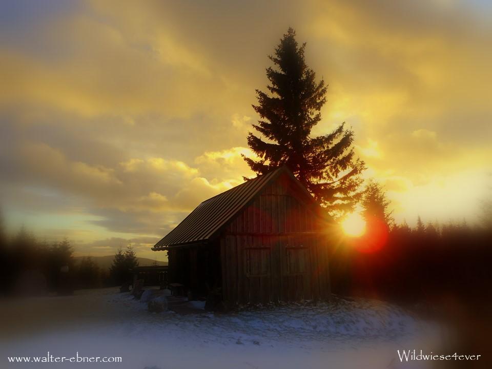 25.12.2018 - Sonnenuntergang auf der Wildwiese