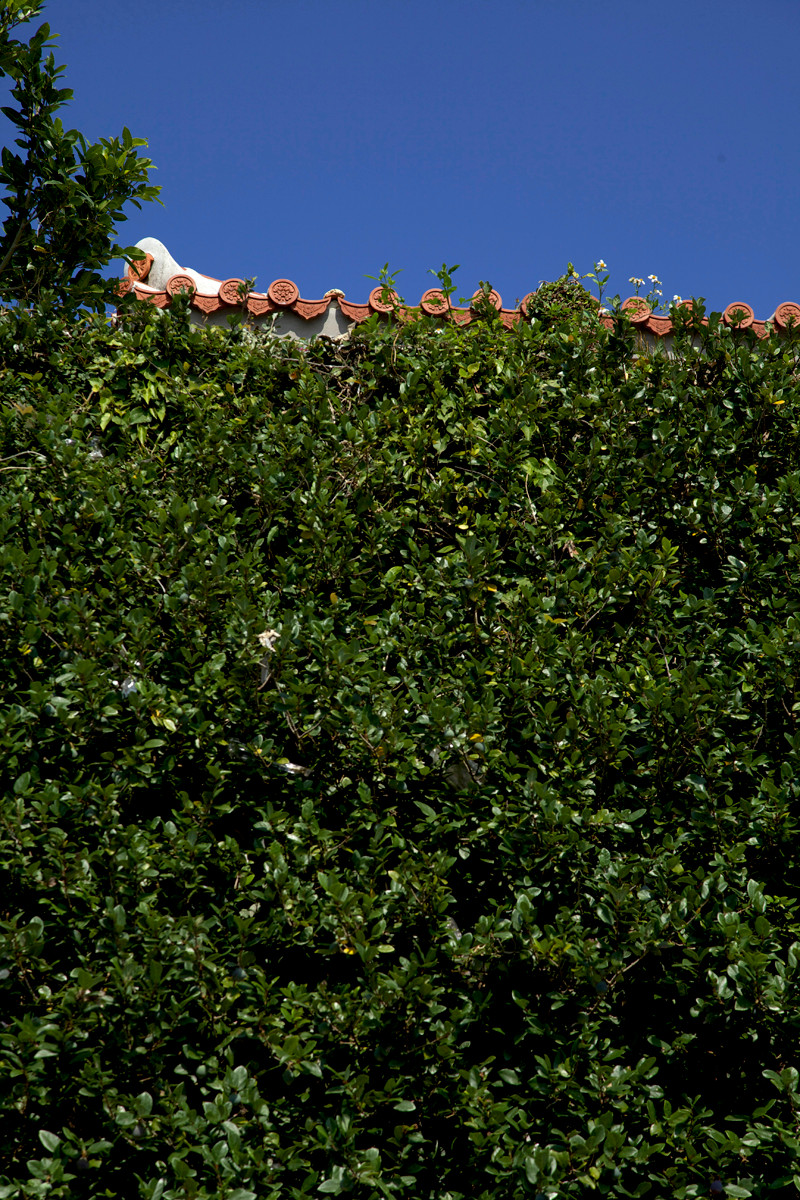 沖縄写真 首里城 オオイタビ と 赤瓦屋根
