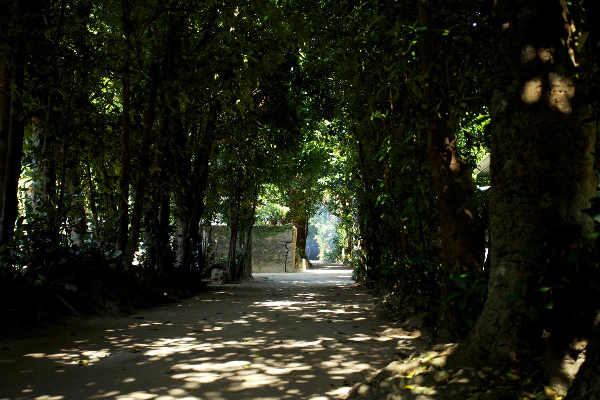 沖縄写真 備瀬のフクギ並木