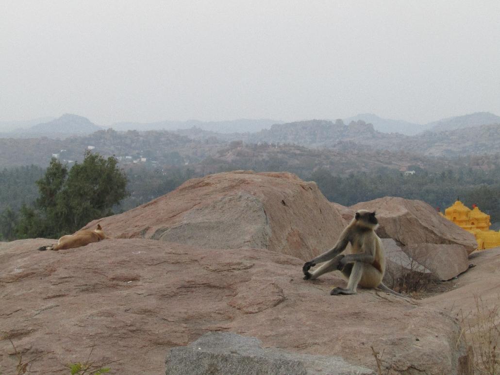 Die stolzen Makaken