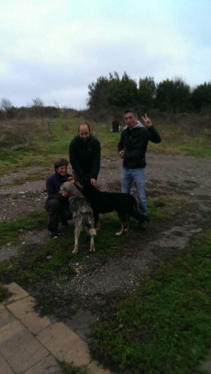 Dog- Rescueteam