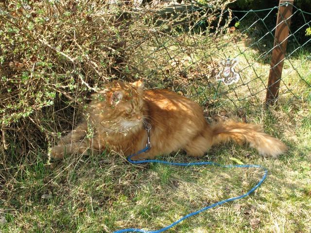 ha ha ,aber Korrie, Leckerlie findet man doch nicht im Garten.