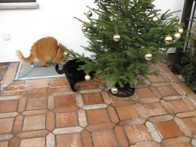 Mohrle und Paulchen beim  Weihnachtsbaum auf der Terasse
