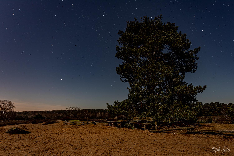 Vollmondnacht in der Westruper Heide bei Haltern