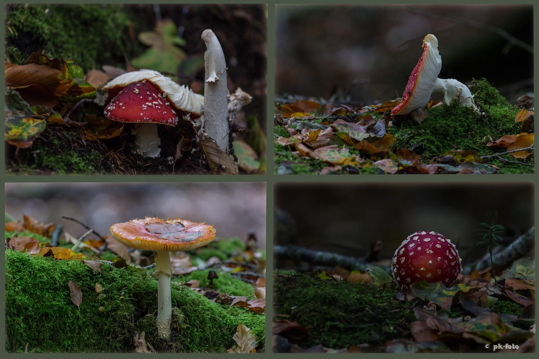 Pilze im Lütetsburger Forst
