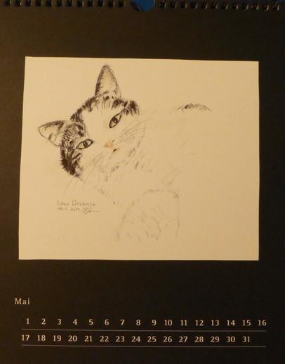 Katzenbild Luna Literata