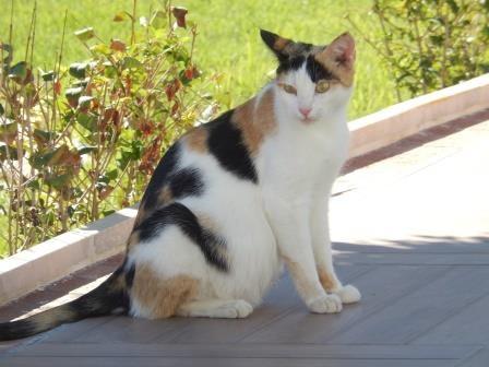 Hilfe für Samtpfoten & Co in Not eV, Kastration Katze Lola
