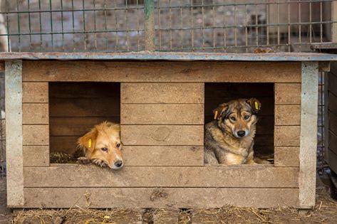 1 Hundehütte für Ploiesti  (120,-- €)