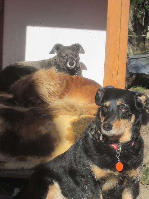 Auch Simmy, Nelly und Szuzy freuen sich über die warmen Sonnenstrahlen