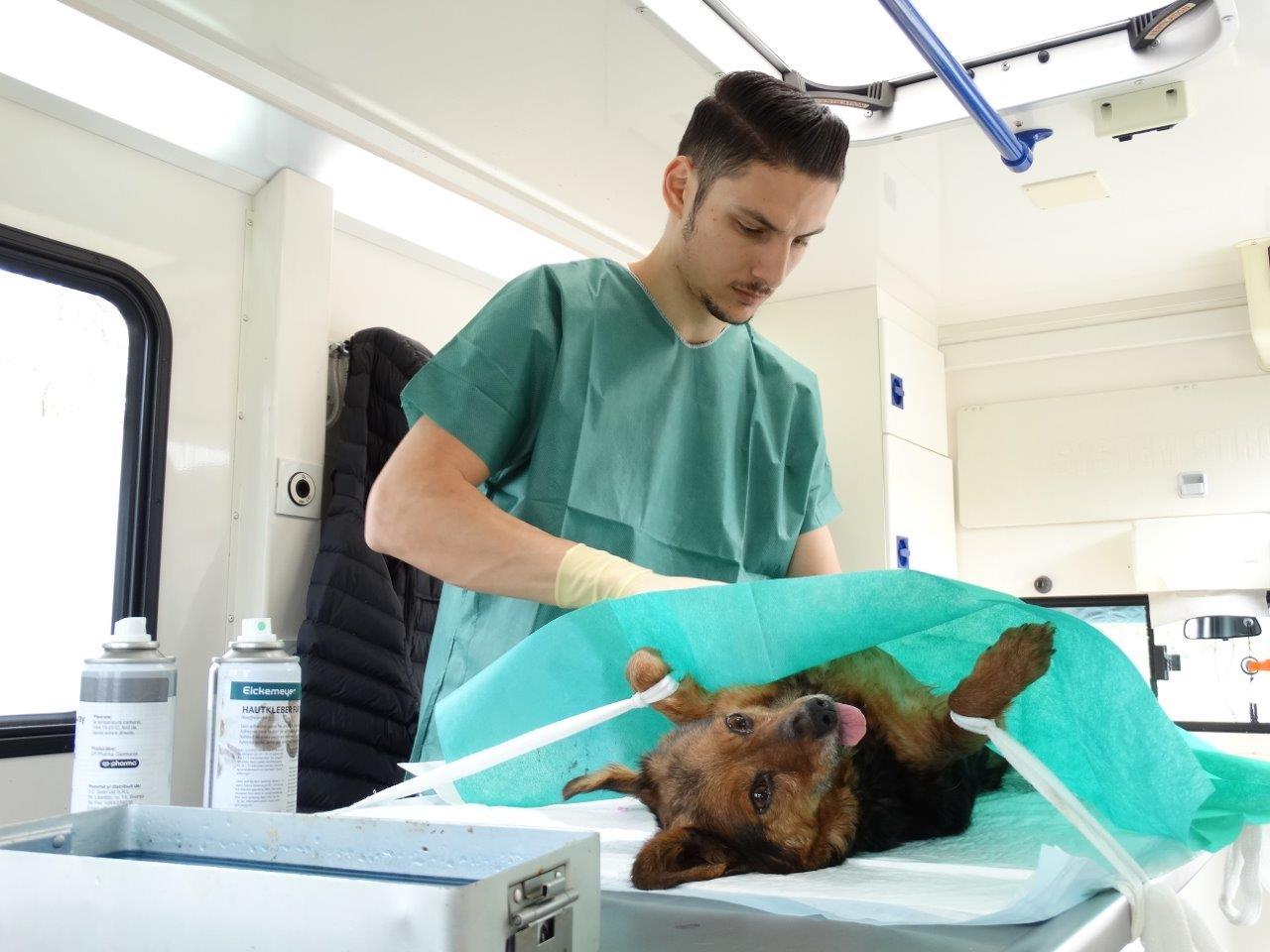 1 Kastration in Rumänien durch Tierhilfe Hoffnung eV