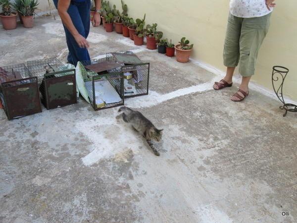 Katzenhilfe Olli eV