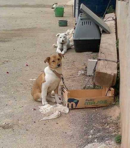 Orlandito - so lebten die Hunde