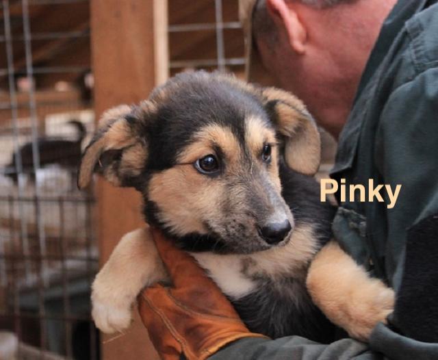 1 Tier in Rumänien durch Namenpatenschaft  Pinky, Pro Dog Romania eV