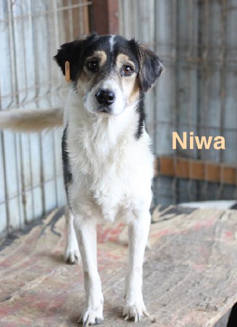 1 Tier in Rumänien durch Namenspatenschaft Niwa, Pro Dog Romania eV