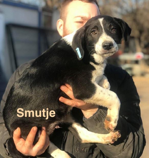 1 Tier in Rumänien durch Namenspatenschaft Smutje, Pro Dog Romania eV