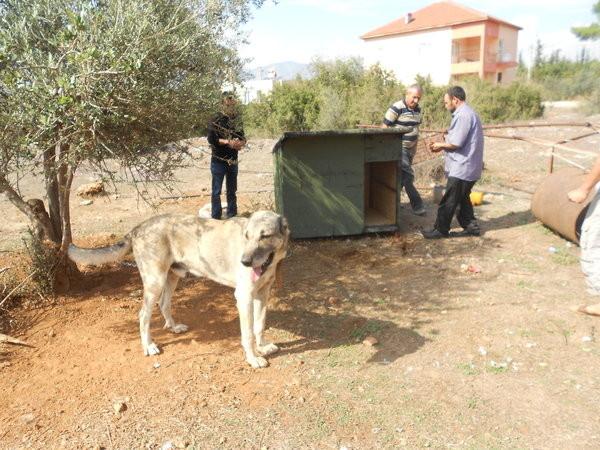 Tierfreude Antalya