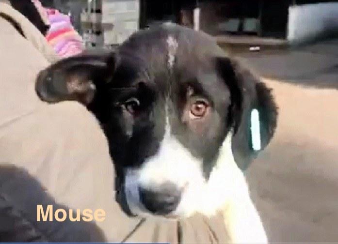 1 Tier in Rumänien durch Namenspatenschaft Mouse, Pro Dog Romania eV