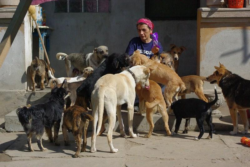 1 Tier in Tantava/Rumänien über Carmen Dodi