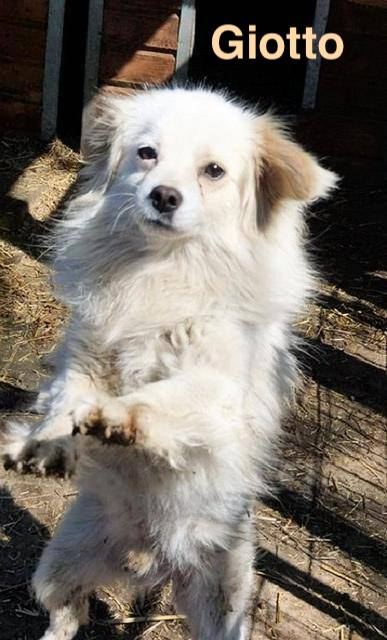1 Tier in Rumänien durch Namenspatenschaft Giotto, Pro Dog Romania eV