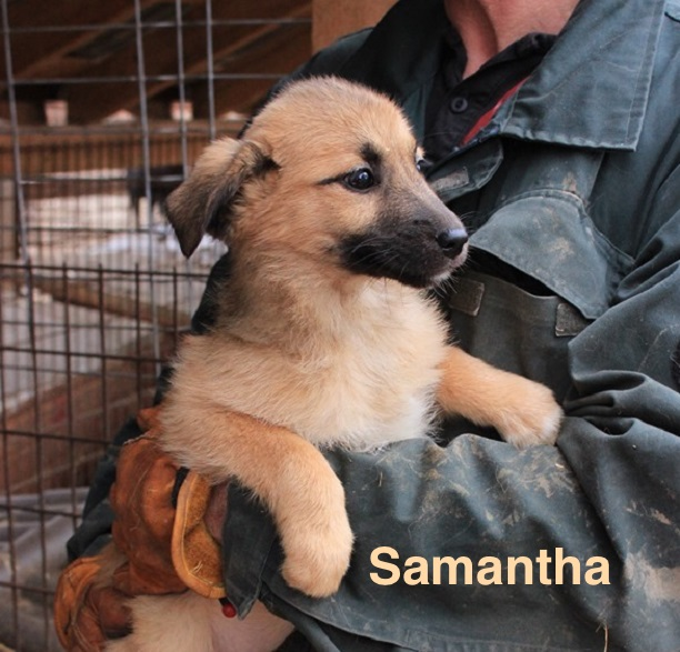 1 Tier in Rumänien durch Namenpatenschaft  Samantha, Pro Dog Romania eV