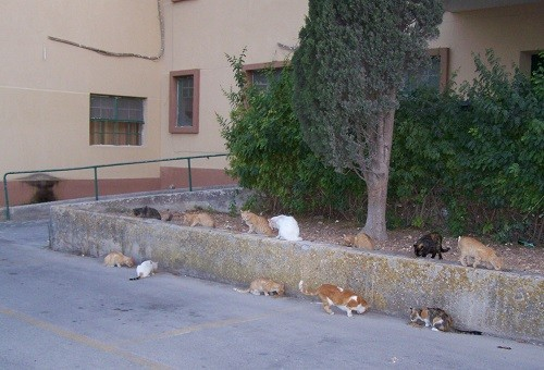 Katzenhilfe Olli eV, Kastration 3 Katzen, 1 Kater auf Malta