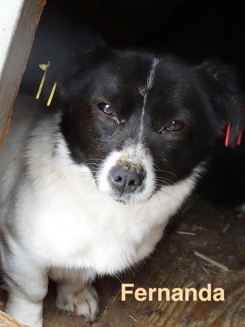 1 Tier in Rumänien durch Namenspatenschaft Fernanda, Pro Dog Romania eV