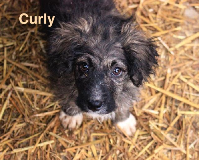 1 Tier in Rumänien durch Namenpatenschaft  Curly, Pro Dog Romania eV