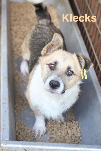 1 Tier in Rumänien durch Namenspatenschaft Klecks, Pro Dog Romania eV