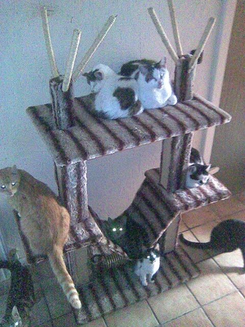Katzensuche Solingen