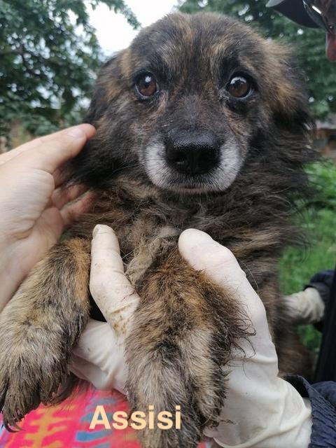1 Tier in Rumänien durch Namenspatenschaft Assisi, Pro Dog Romania eV