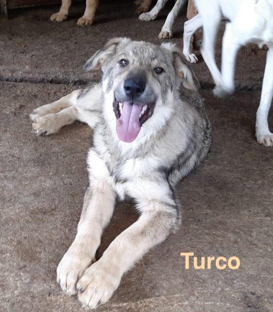 1 Tier in Rumänien durch Namenspatenschaft Turco, Pro Dog Romania eV